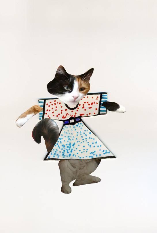 chat avec robe mini